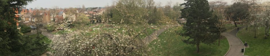grass and cherry trees in flower